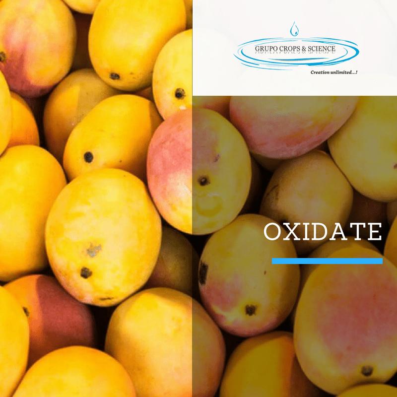 oxidate mangos